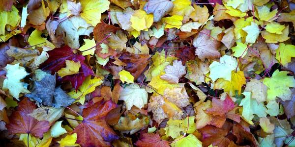 Collecte de surplus de feuilles et résidus de jardin