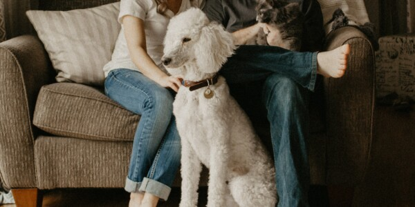 SPA de l'Estrie | Renouvellement des licences de votre animal de compagnie